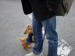 お散歩にパパ出現で大喜び HBコートを着た不憫なインディ・・