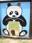パンダに抱っこされるウェン