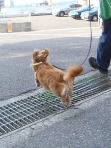 浮いてるようにしか見えないジャンプ! 短いお耳の毛だるまラビット