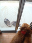 多分窓を開ける前から羽音が 聞こえてて興奮してた2ワン