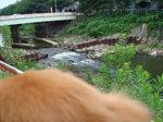 無理矢理川を見せられるインディ  ・・・を一人で撮影。力仕事だった。