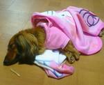 めずらしくイヌらしい寝方♪