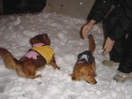 パパと雪遊び