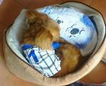 ちゃんと着て寝てるよ!ベッド大きくて寒いねんもん.JPG