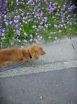 ボクとお花、きれいに撮ってね