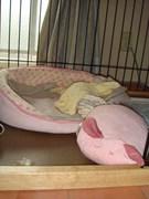 ウェンちゃんのおうち。ベッドを散らかして・・・逃走?