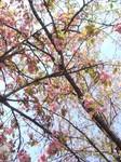 八重桜が主役交代といわんばかりに咲いていました