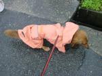 レインコートで雨の中の初うんこ