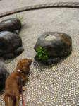 噴水?!椎名桔平岩?!
