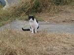 白黒猫さん 降りて近づいても動じなかったかな?