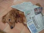 新聞が似合うって・・・